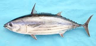 خرید کن تن ماهی