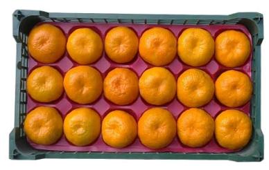 فروش  نارنگی