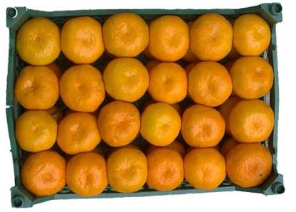 خرید کن نارنگی
