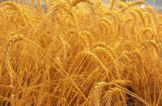 خرید کن محصولات زراعی