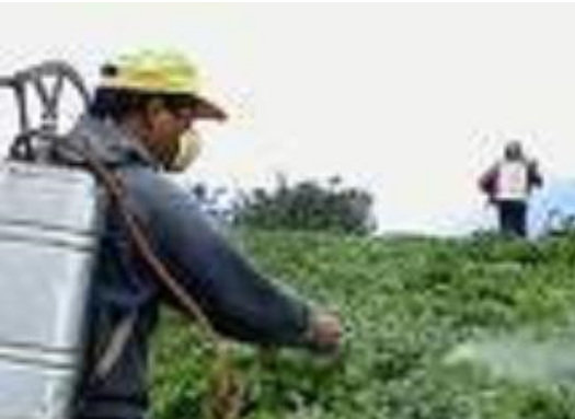 خرید کن حشره کش گیاهی