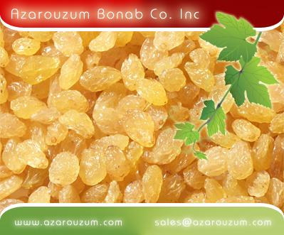 فروش  (کشمش انگوری (طلایی
