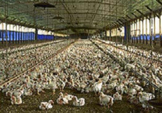 خرید کن گرماتاب در مرغداری ها