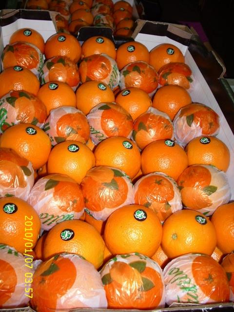 Buy High quality Orange