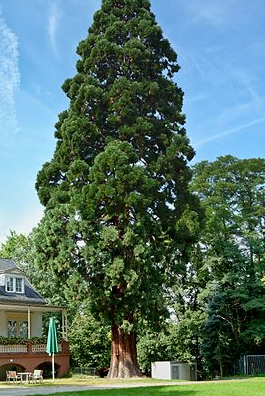 فروش  درختان
