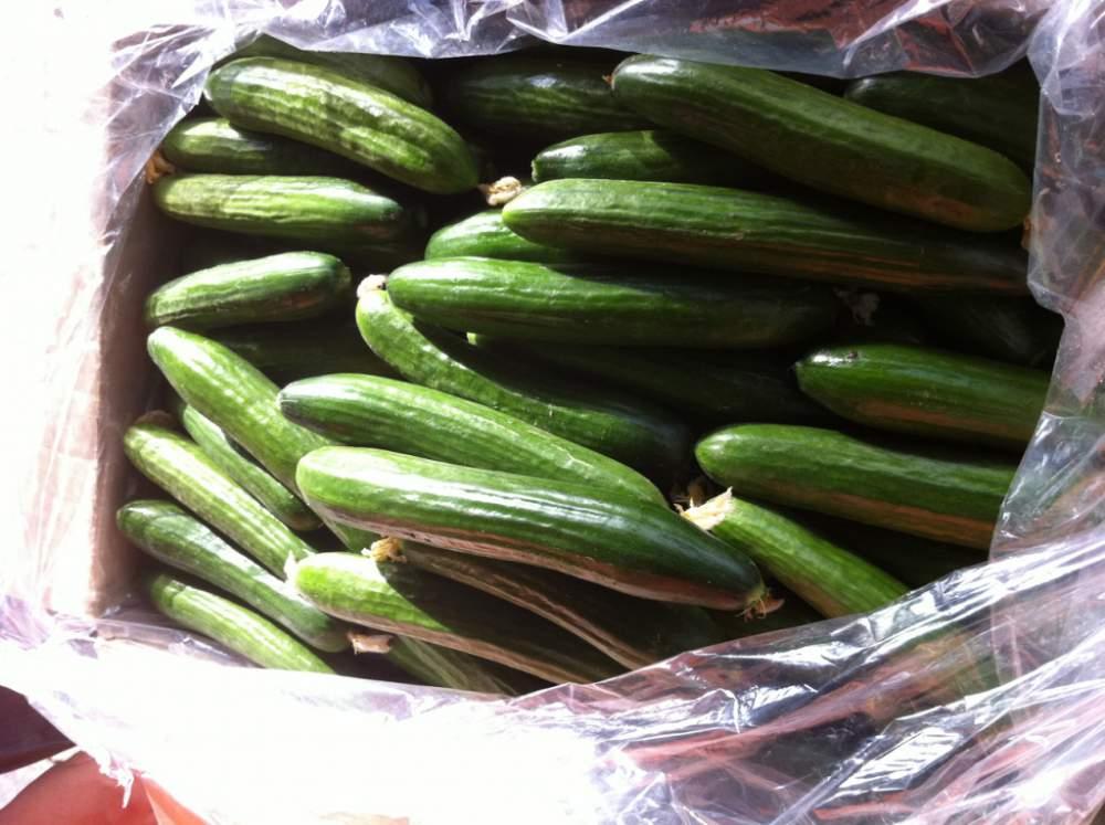 فروش  Cucumber