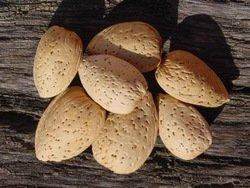 خرید کن Best quality iranian almond in shell