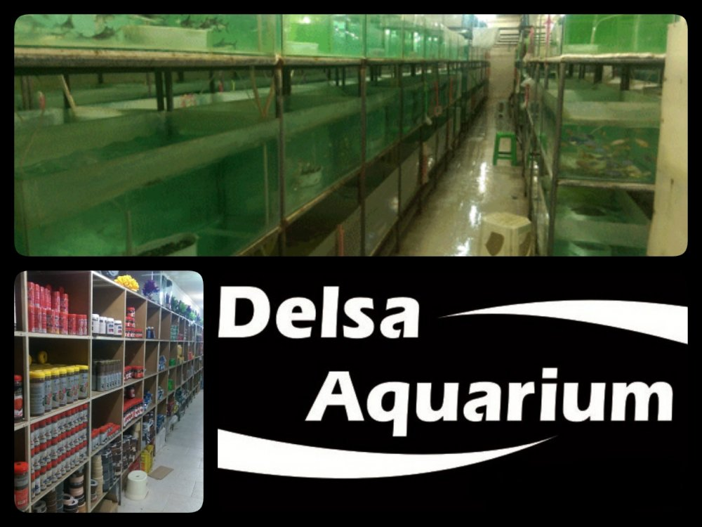 فروش  Oornamental fish, Aquarium and Accessories