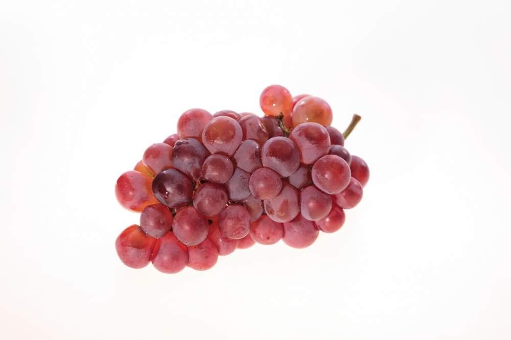 فروش  كنسانتره انگور قرمز و انگور سفيد