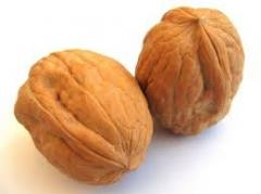 Best quality iranian walnut in shell