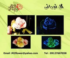 گل نورانی
