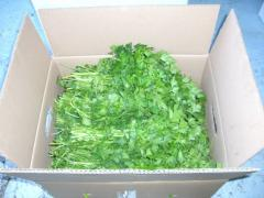 Green dill,green parsley,green coriander، green basil,...
