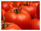 رب گوجه فرنگی