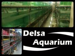 Oornamental fish, Aquarium and Accessories