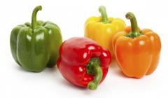 Fresh CAPSICUM ( sweet bell pepper )