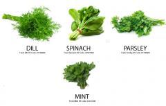 Fresh Vegetabels