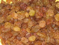 Malayer raisin