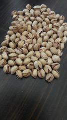 Nuts processing equipment industrial