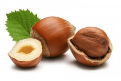 High quality natural Hazelnut/Filbert/Cobnut