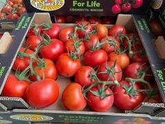TOMATO (Cluster Greenhouse Tomato)