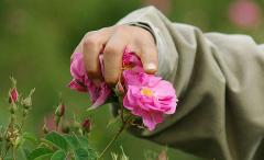 گلاب و عرقیات گیاهی