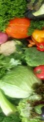 صیفی جات و سبزیجات