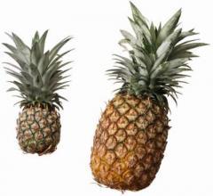 كنسانتره آناناس