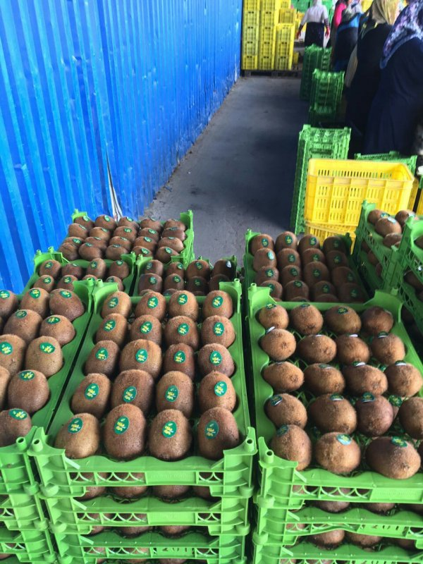 kiwi_fruit