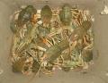صادرات خرچنگ زنده