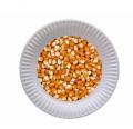 دانه ذرت جهت تغذیه دام , طیور و آبزیان