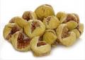 Fig tree saplings