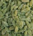 Green long kashmar raisin