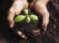 کود بیولوژیک مخصوص فضای سبز