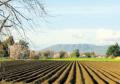 کود بیولوژیک مخصوص مزارع