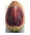 Pistachio kernel