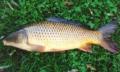 ماهی گرم آبی