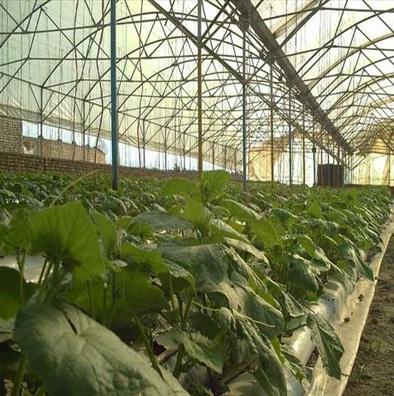 سفارش Fully Automatic Greenhouse