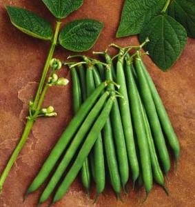 سفارش فراوری وبسته بندی سبزیجات معطر