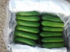 شرکت صادرات و واردات پایا استارا صادرات میوه های فصلی ایرانی