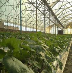 Fully Automatic Greenhouse