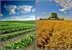 بازرسی محصولات کشاورزی